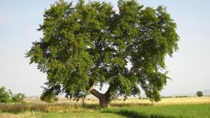Soy Ağacı ve Tarihi Araştırmaları